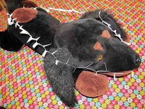 3X5 card stretched around toy dog