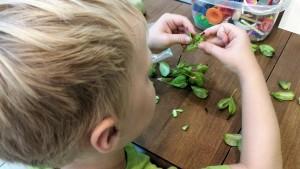 Xander opening seeds